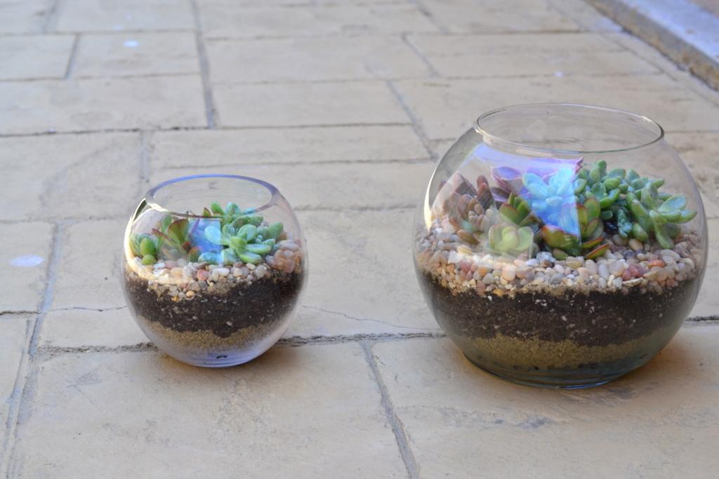 terrarium petit the republic of succulents. Black Bedroom Furniture Sets. Home Design Ideas