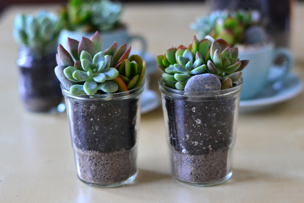 The Mug Collection The Republic Of Succulents